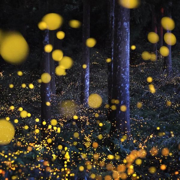 Februar ist der nationale Monat des Haiku Gedicht Schreibens glühwürmchen nacht schön