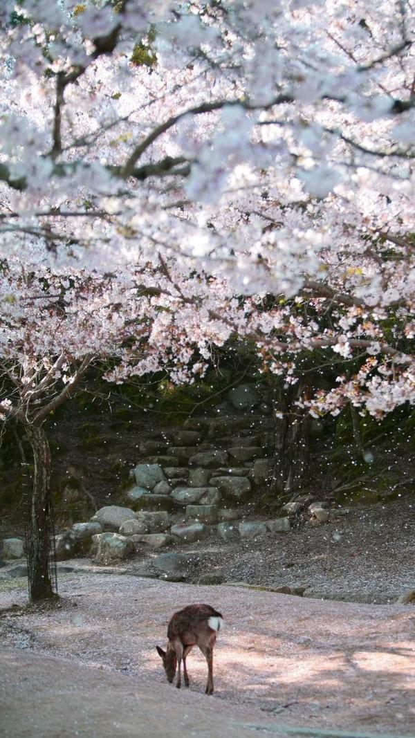 Februar ist der nationale Monat des Haiku Gedicht Schreibens hirsch unter pflaumen bäume