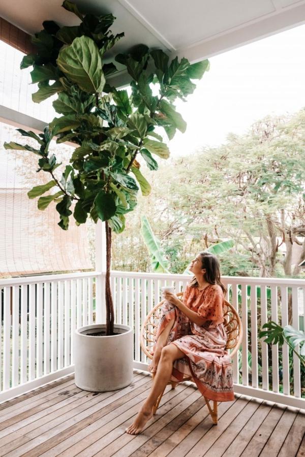 Geigenfeige Pflege Ficus Lyrata auf dem Balkon