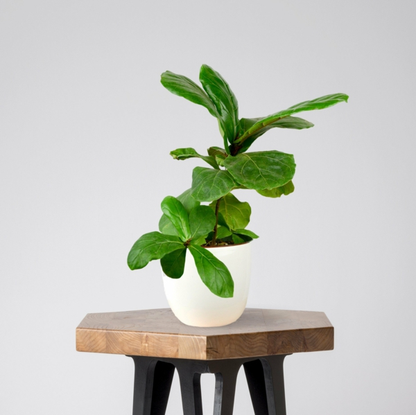 Modern Wooden Stool with Hexagonal Top and Black Legs
