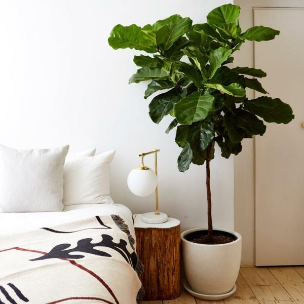 Geigenfeige Pflege Ficus Lyrata pflegeleichte Zimmerpflanzen Schlafzimmer