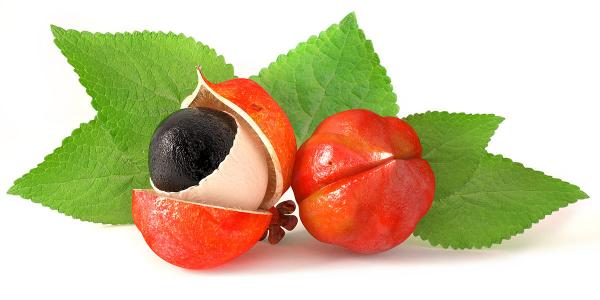 Guarana exotische Frucht Samen Alternative zu Kaffee Wachmacher Wirkungen Nebenwirkungen