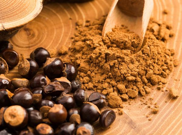 Guarana exotische Frucht Samen werden geschält getrocknet zu Pulver zermahlen Alternative zu Kaffee ideen