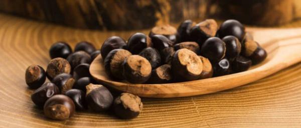 Guarana exotische Frucht Samen werden geschält getrocknet zu Pulver zermahlen Alternative zu Kaffee
