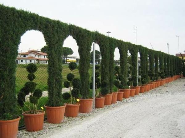 Immergrüne Heckenpflanzen Zaun aus Hecken Kunstwerk