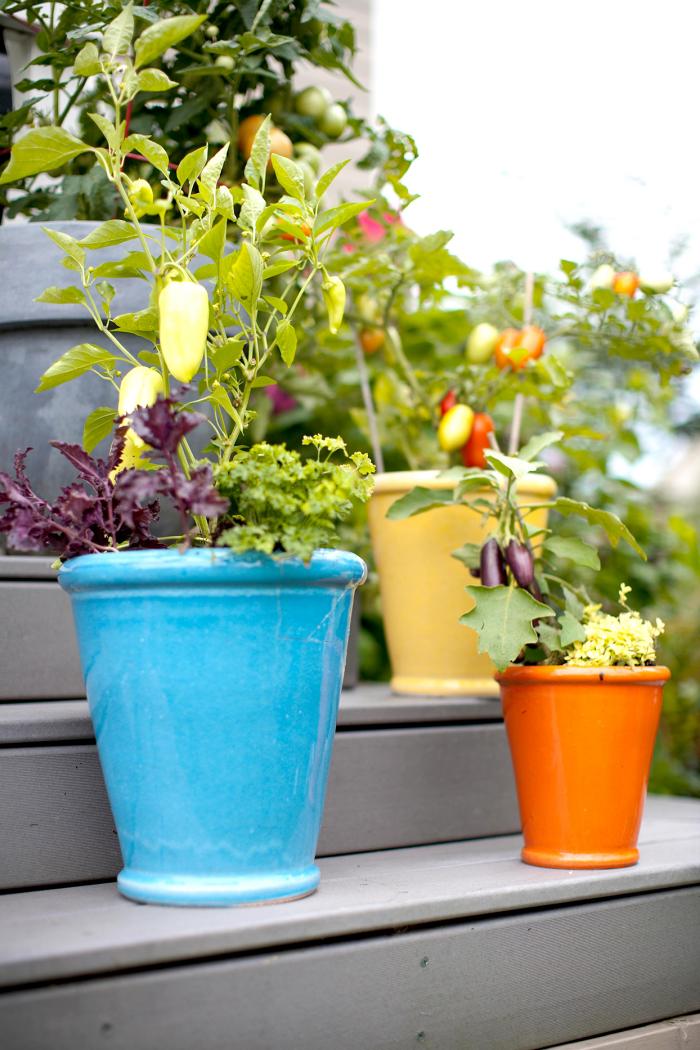 Kleinen Hinterhof gestalten farbenfrohe Töpfe auf Trittstufen Tomaten Auberginen paprika darin züchten