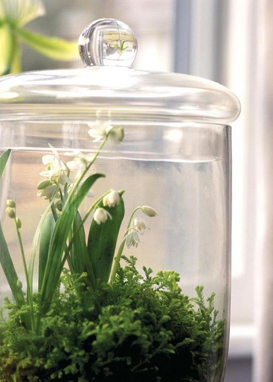 Minigarten im Glas Glasbehälter mit Deckel Maiglöckchen Blickfang idee