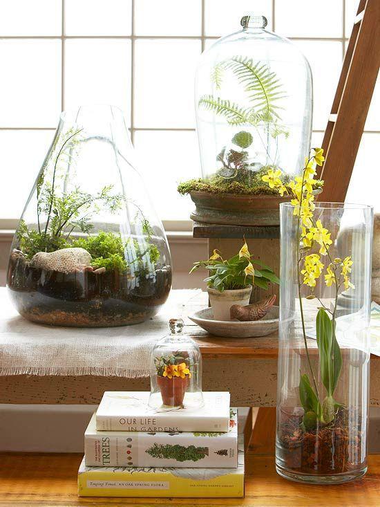 Minigarten im Glas Orchidee Farne Moos drei Behälter am Fenster heller Standort keine direkte Sonne