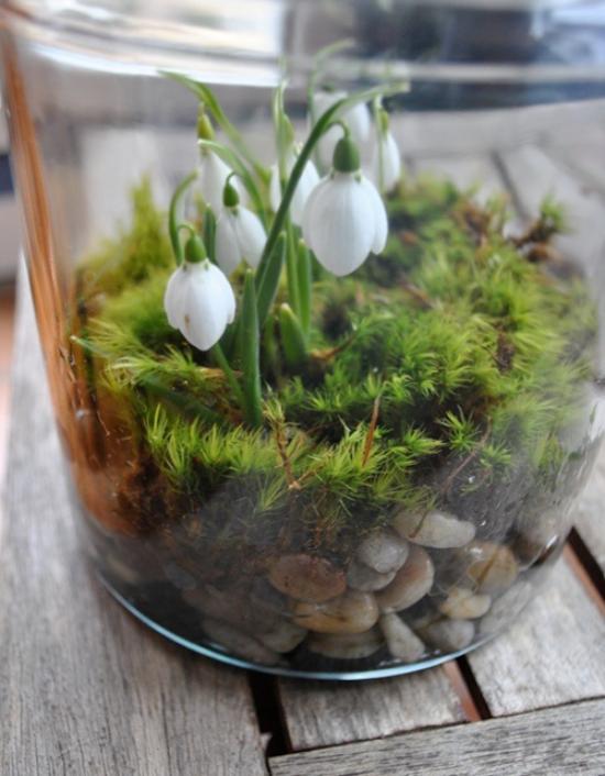 Minigarten im Glas Schneeglöckchen Moos kleine Steine Substrat Andeutung an kommenden Frühling