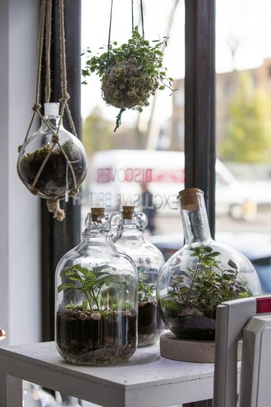 Minigarten im Glas als Glasflaschen neuer Einsatz am Fenster platziert zwei runde Gefäße als Ampeln