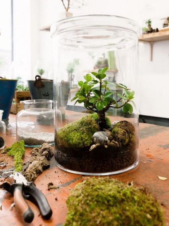 Minigarten im Glas anlegen Nutur pur im Mini-Format grüne Sukkulente wie kleiner Baum Dekoelemente