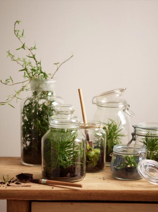 Minigarten im Glas anlegen alte Bügel-oder Schraubgläser einen neuen Einsatz gefunden
