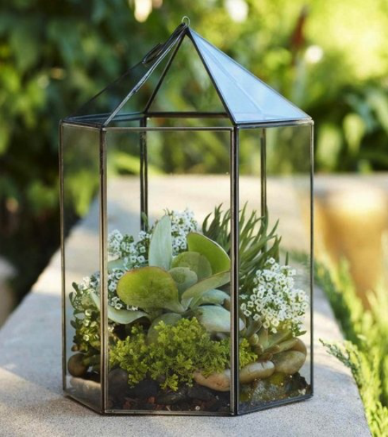 Minigarten im Glas attraktive Form des Glasbehälters wie Pyramide Sukkulenten kleine weiße Blüten