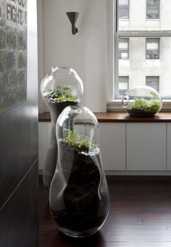 Minigarten im Glas drei hohe Glasbehäster ausgefallene Form als Zimmerdeko Blickfang