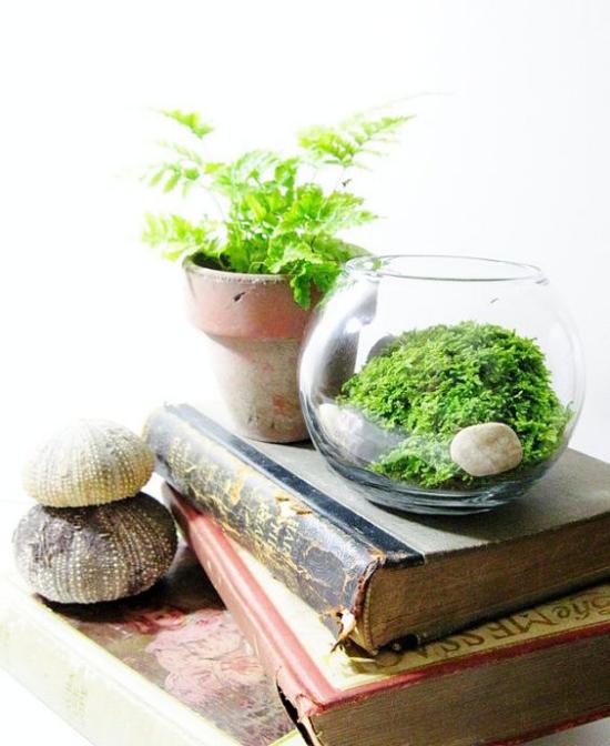 Minigarten im Glas ein Glasbehälter ein ausgedienter Blumentopf Deko alte Bücher