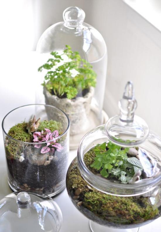 Minigarten im Glas ein heller Platz am Fenster aber nicht zu sonniger Standort ideal für Minigärten