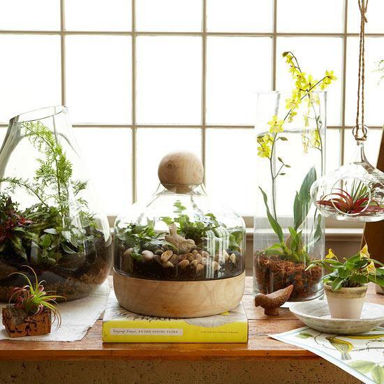 Minigarten im Glas einige Glasbehälter verschiedene Formen grüne Pflanzen darin am Fenster platziert