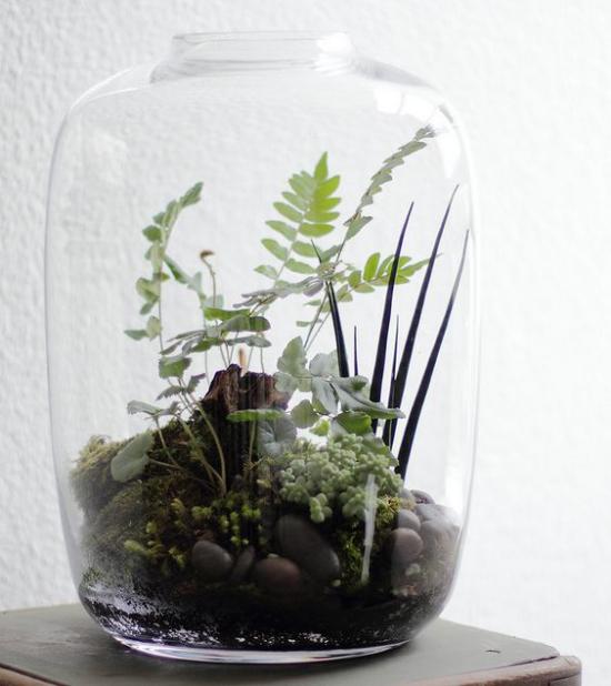 Minigarten im Glas großes Glasgefäß ohne Deckel kleine Steine Moos grüne Pflanzen