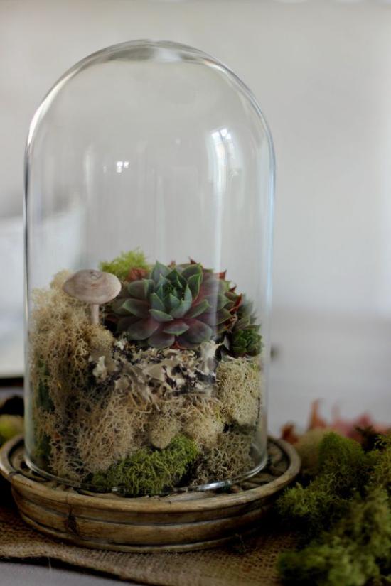 Minigarten im Glas hoher Glasbehälter Sukkulenten Pilze interessantes Arrangement naturecht
