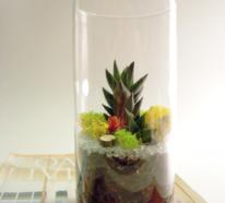 Minigarten im Glas bringt ein Stück Natur ins Haus