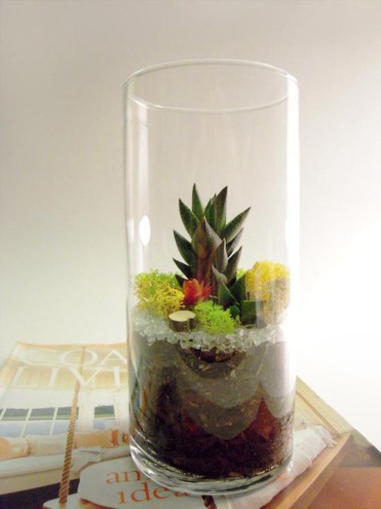 Minigarten im Glas hohes Glasgefäß verschiedene Pflanzen gut arrangiert Sukkulenten