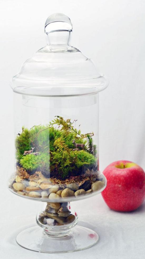 Minigarten im Glas kleine grüne Landschaft unter Deckel Blickfang roter Apfel daneben
