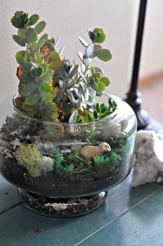 Minigarten im Glas kleines offenes Glasgefäß gut bepflanzt Sukkulenten dekorative Elemente Schaf