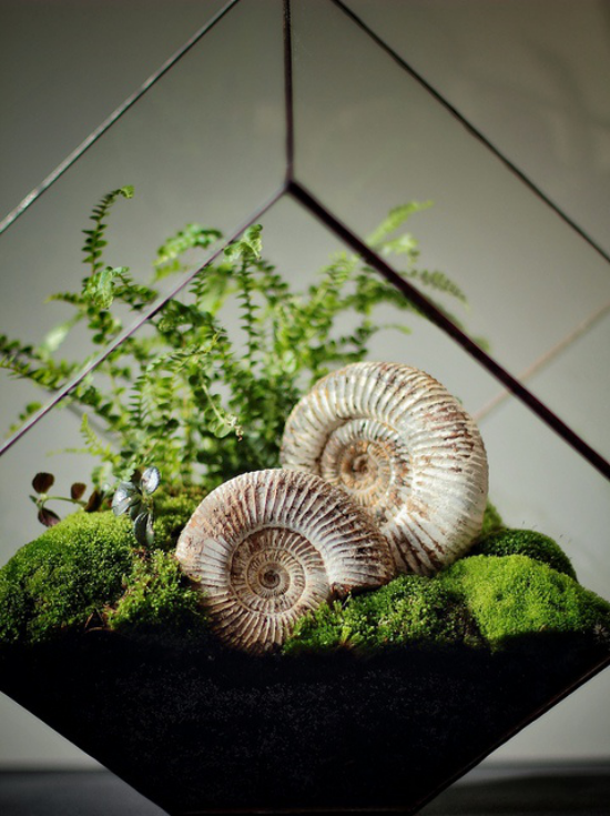 Minigarten im Glas kreatives etwas ausgefallenes Arrangement mehreckiger Glasbehälter dekorative Elemente Schnecken Moos Farn