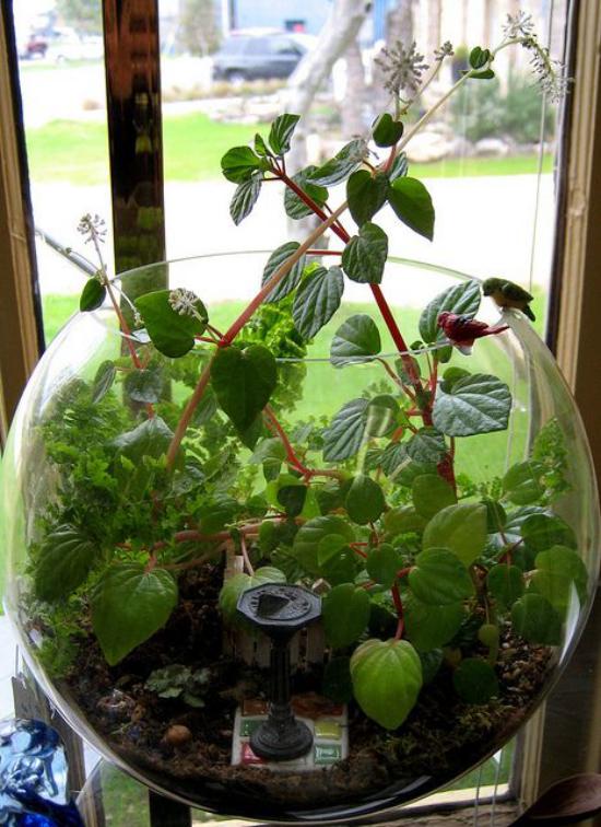 Minigarten im Glas rundes Gefäß Klarglas viele grüne Pflanzen darin am Fenster platziert