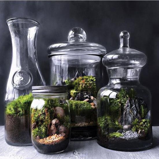 Minigarten im Glas vier verschiedenen Glasbehälter gutes Enderbebnis im Mini-Format