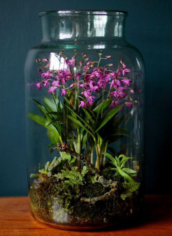 Minigarten im Glas vor einer dunklen Wand platziert blühende Pflanzen im Glasbehälter