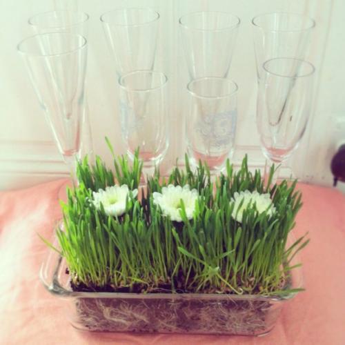 Ostergras selber säen im Glasgefäß mit weißen Blüten dekoriert auf dem Tisch platziert