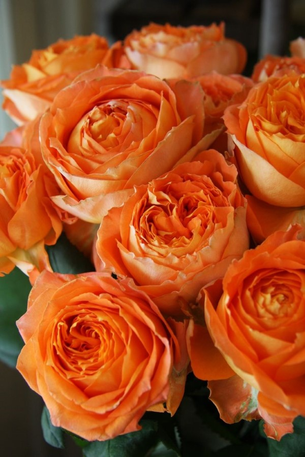 Rosenfarben und ihre Bedeutung – So treffen Sie die richtige Wahl für jeden Anlass orange rose schön gelb