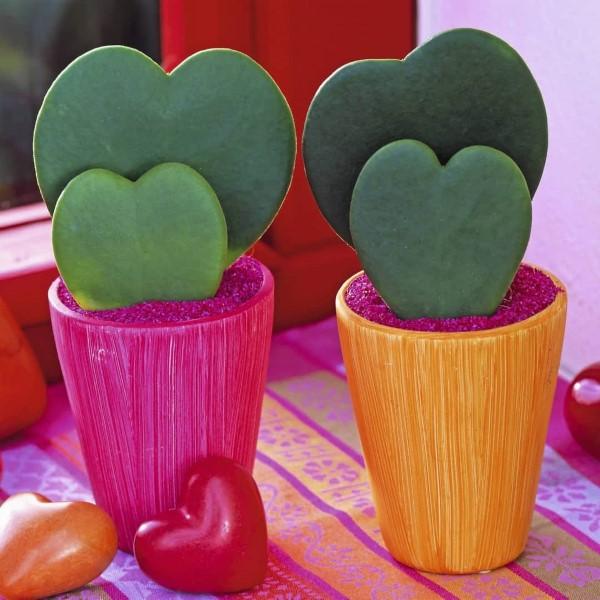 Schlaue und liebevolle Valentinsgeschenke für Damen und Herren zimmer pflanzen herzen blätter