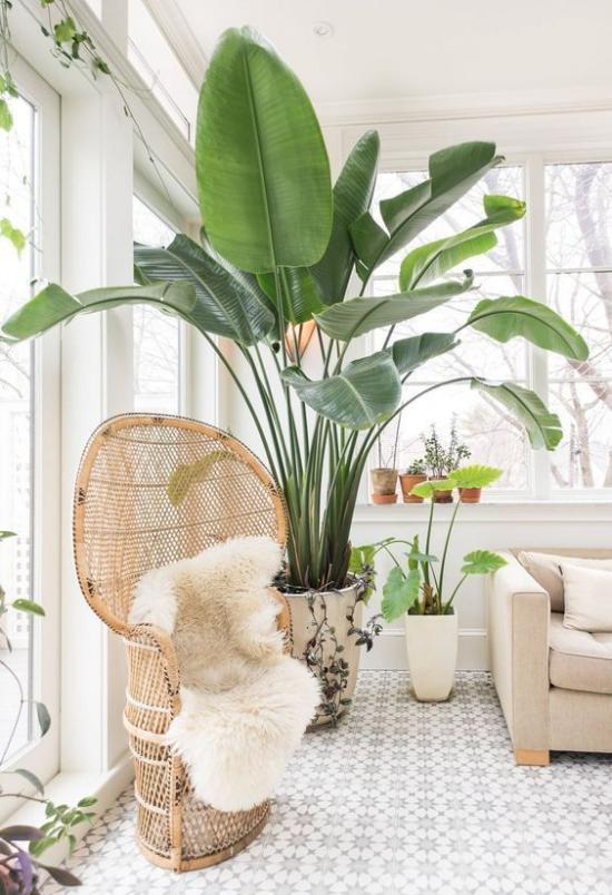 Trends 2021 in der Inneneinrichtung exotische Topfpflanze Hingucker heller Raum weißer Pelz natürliche Materialien
