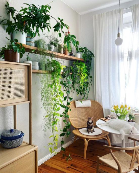 Trends 2021 in der Inneneinrichtung gemütliche Essecke viele grüne Pflanzen Katze Holz natürliche Materialien
