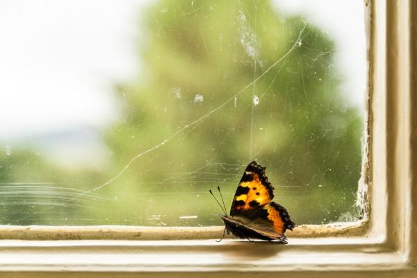 Ungebetene Hausgäste nachhaltig gegen Insekten im Haus und Wohnung vorgehen schmetterling am fenster zuhause