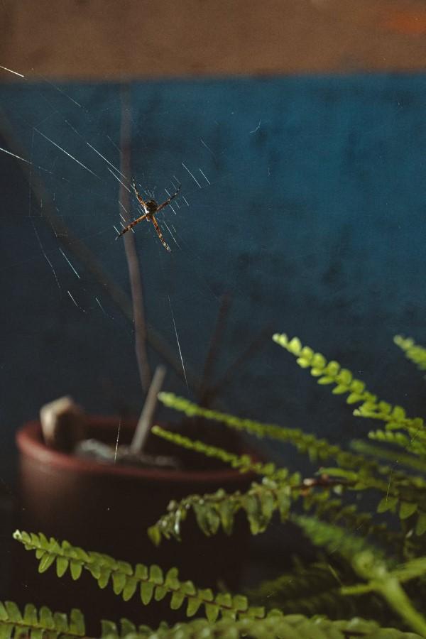 Ungebetene Hausgäste nachhaltig gegen Insekten im Haus und Wohnung vorgehen spinne zuhause