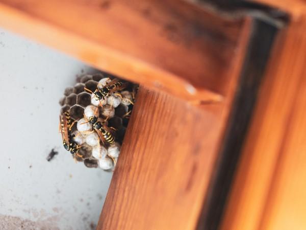 Ungebetene Hausgäste nachhaltig gegen Insekten im Haus und Wohnung vorgehen wespen nest zuhause
