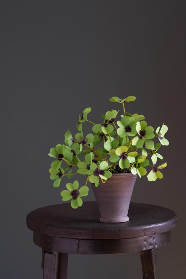 Vierblättriges Kleeblatt – Pflegetipps und Wissenswertes über dem Glücksklee moderne zimmerpflanze die glück bringt