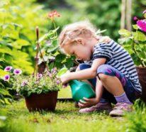 Welche Kräuter passen zusammen?- Kräutergarten anlegen leicht gemacht