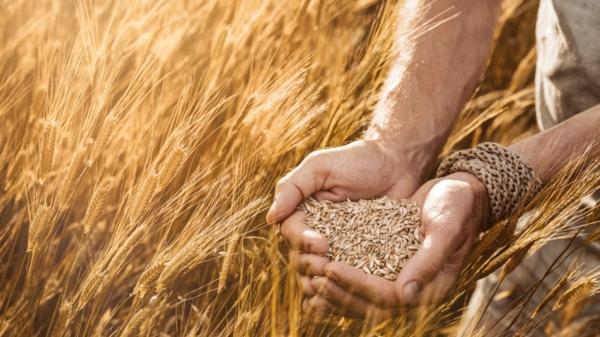 alte getreidesorten glutenfrei gesund