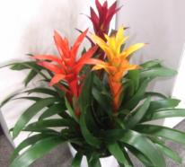 Blühende Zimmerpflanzen bringen mehr Farbe in Ihre Innenräume