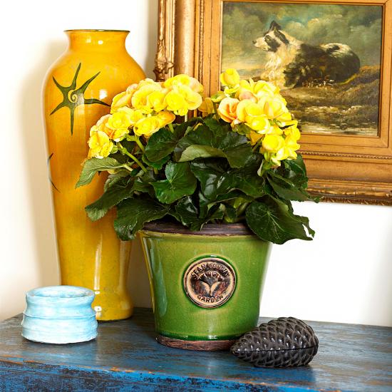 blühende Zimmerpflanzen gelbe Blüten glänzende grüne Blätter schöner Topf