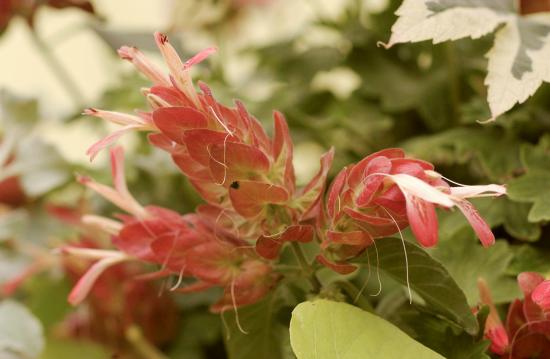 blühende Zimmerpflanzen interessante Blütenblätter gedeckte Farben