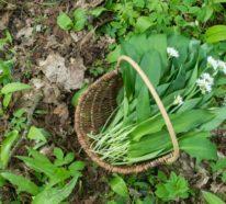 11 Essbare Wildkräuter im Frühling, die heilen und vitalisieren