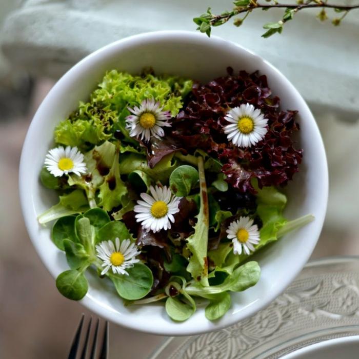 essbare wildkräuter gänseblümchen salat