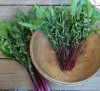 Essbare Wildkräuter- 10 gesunde Frühlingsrezepte aus der Kräuterküche