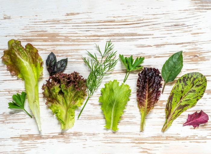 gesunde frühlingsrezepte salat blatt