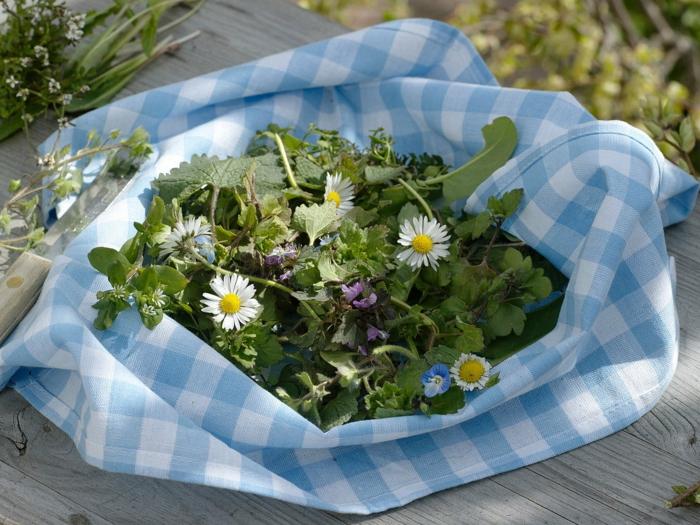 gesunde frühlingsrezepte salat gänseblümchen